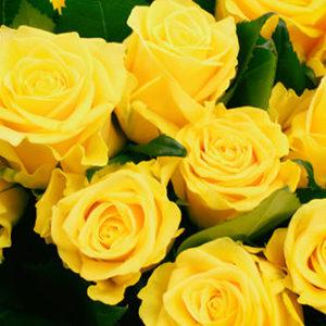 yellow-rose01